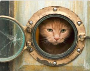 Catdoor