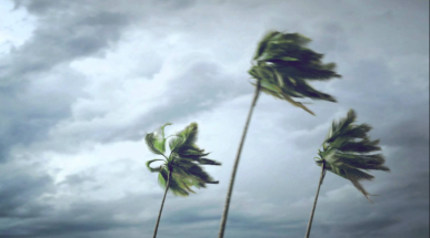 wind palm trees.png